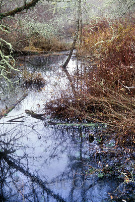 Creek in Mount Pisgah, Willamette Valley, Oregon.