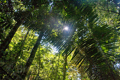 View of forest mid-story, Tambopata River, Peruvian Amazon