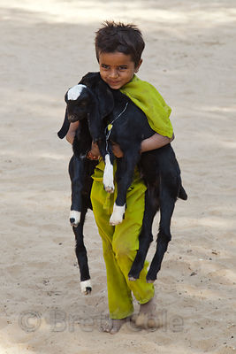 A girl from a rural village near Jaisalmer, India brings her goats to the Jaisalmer animal hospital for vaccinations
