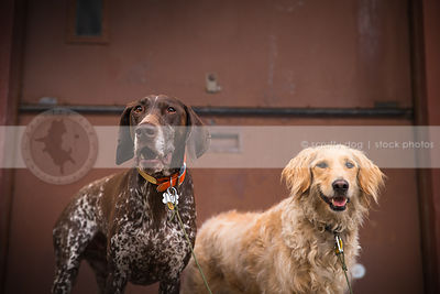 two humorous dogs standing at steel door of urban warehouse