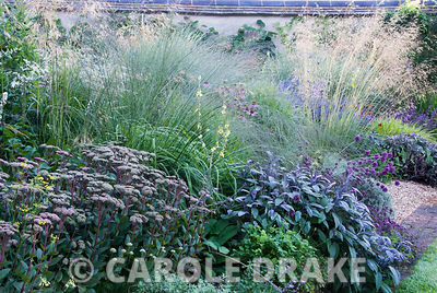 Deep purples of Sedum telephium 'Matrona' and Salvia officinalis 'Purpurascens' with airy grasses above, Molinia 'Transparent...