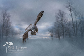 Flight of the Great Gray Owl