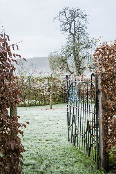 A gate opening from Arcanum into the Japanese Cherry Orchard with a massive old perry pear tree beyond.
