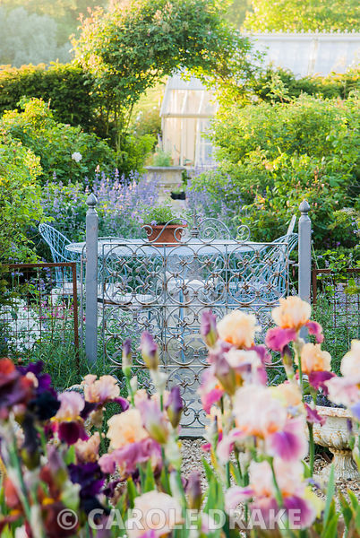 Bed of tall bearded irises with decorative metal gate leading into terrace garden behind, featuring wirework table and chairs...