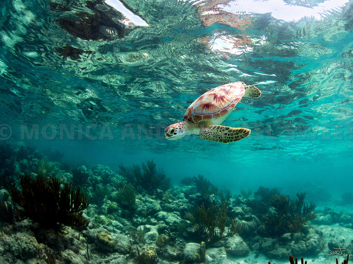 honu sea emerald green