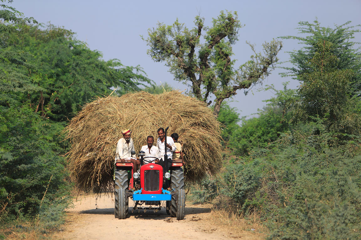 Famers haul hay by tractor near Kadel Village, Pushkar, Rajasthan, India