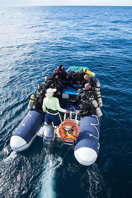 Scuba divers travelling to dive site aboard inflatable boat from the Galapagos Aggressor live-aboard dive boat, Galapagos Isl...
