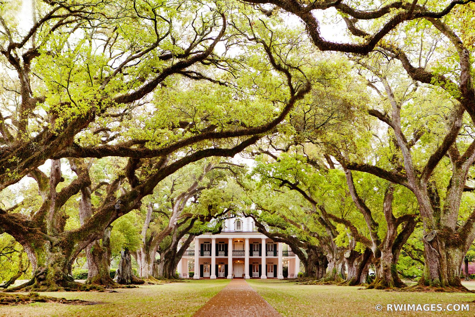 OAK ALLEY PLANTATION VACHERIE LOUISIANA COLOR