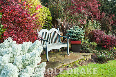 Bench in the silver and red border near the house with berberis and artemisia nearby. The Dingle Garden, Welshpool, Powys, Wales