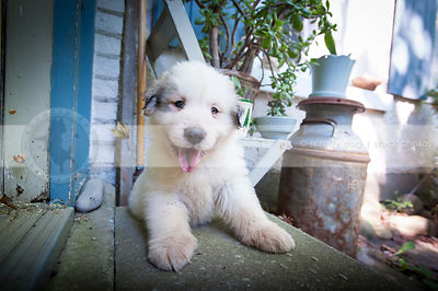 happy expressive white puppy dog on concrete steps at house