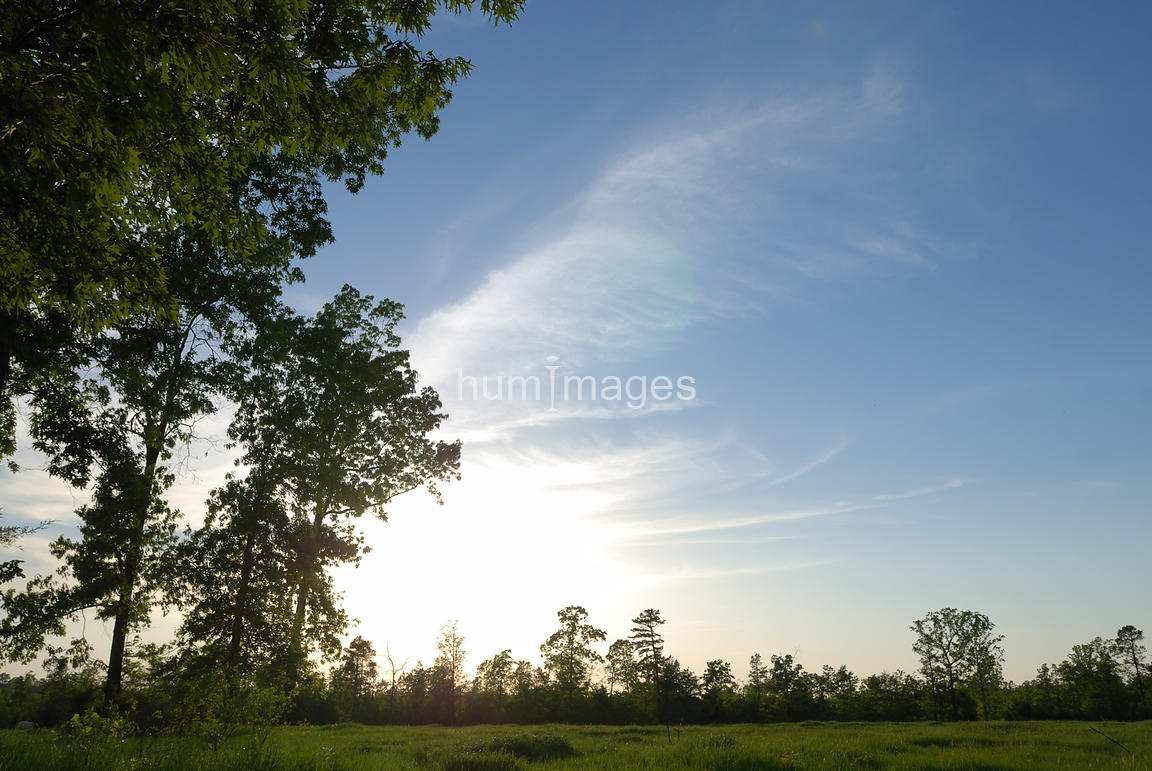 Silhouette of trees with sunny blue sky