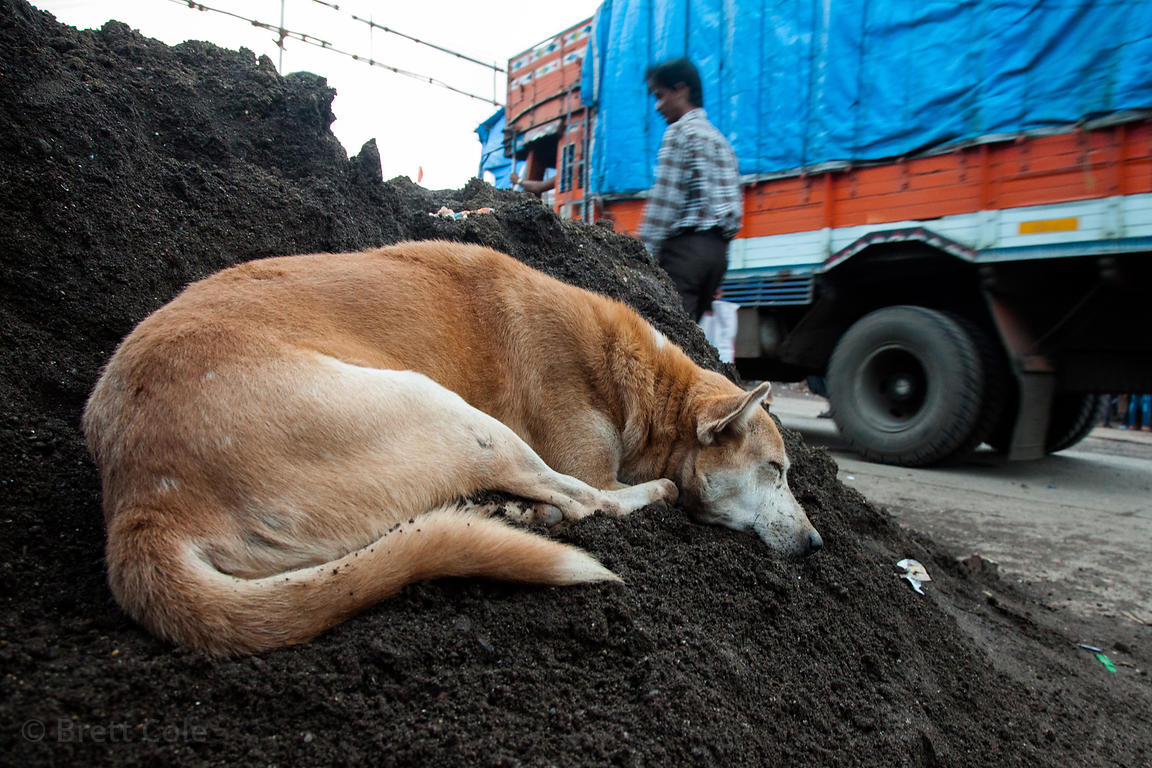 A stray dog sleeps on a dirt pile in the Dharavi slum, Mumbai, India.