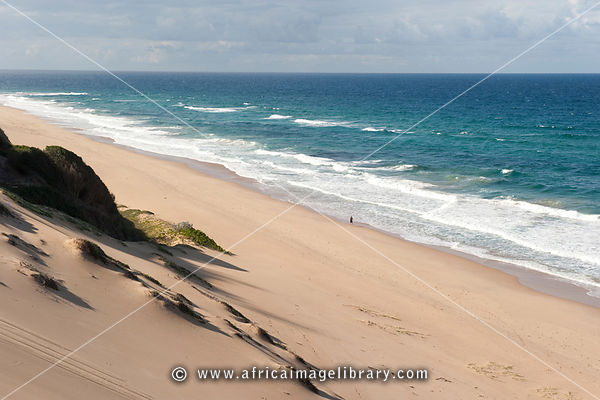 Vegetated dunes along the beach, Ponta d'Ouro, Mozambique