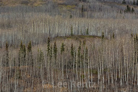 Forest Covering the Talkeetna Mountains