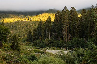 Late light on Redwood forest along the Smith River at Hiouchi, Jedidiah Smith Redwoods State Park, California