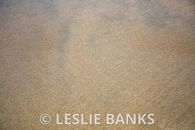 Sand Background at South Ocean Beach at Assateague Island