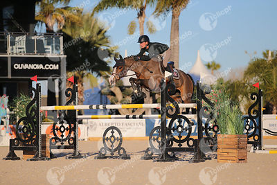 Oliva, Spain - 2019 February 13: 7 years old 1m35 during CSI Mediterranean Equestrian Spring Tour 2.(photo: 1clicphoto.com)