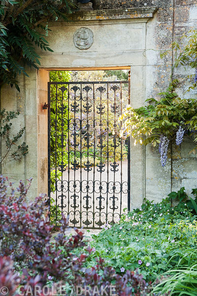 Wrought iron gate into the garden surrounded by wisteria. Iford Manor, Bradford-on-Avon, Wiltshire