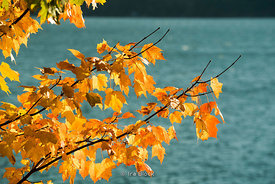 Autumn leaves near the Otsego Lake in Coopertown, New York.