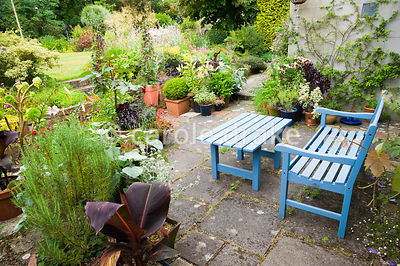 Blue painted seat on one side of the house is surrounded by pots containing tender perennials and annuals including ricinus, ...