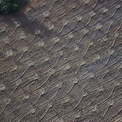Ploughing Pattern Marks, Almeria