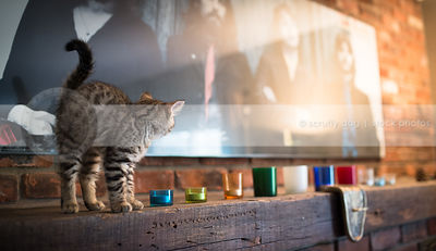 scared arched brown tabby kitten looking away standing on fireplace mantle