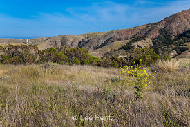 High Plateau on Santa Cruz Island in Channel Islands National Park