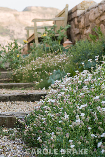 A stepped path runs between the front of the Chesil Gallery and a wall below rising form of the Chesil Bank. Seaside plants i...