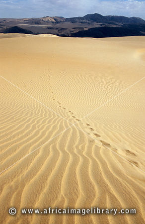 Ripples and tracks in the dunes, Kunene region, Kaokoland, Namibia