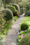 Path leading through the pond garden to the iron gate leading into the pinetum, edged with shaped shrubs and clumps of bright...