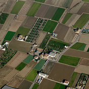 Crop Fields, Valencia