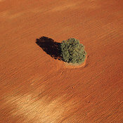 Oak Tree in Red Soil, Southern Spain