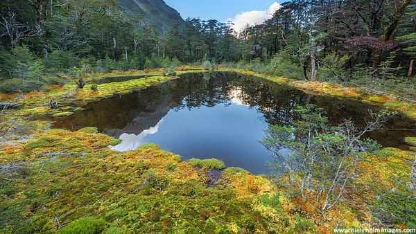 Wild pond, Nelson Lakes National Park - New Zealand