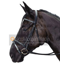 Equine stock photography of bridles