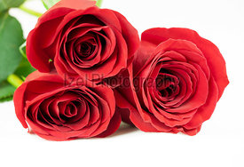 Three red roses on a white background.