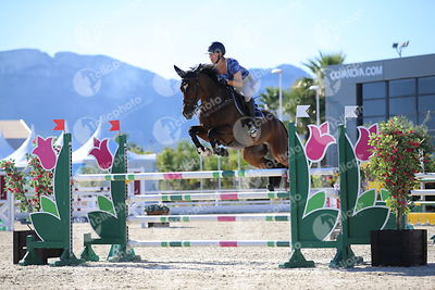 Oliva, Spain - 2018 October 3: 6 years old 1m25 during CSI Mediterranean Equestrian Autumn Tour I.(photo: 1clicphoto.com)