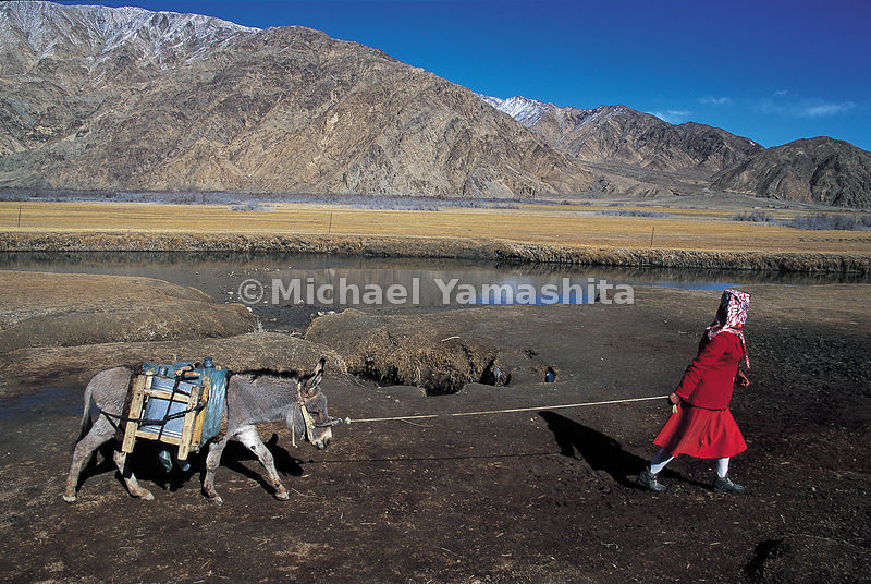 A young Tajik leads her donkey through the immensity of the Chinese Pamirs.