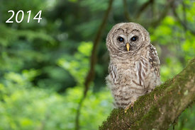 Front Cover - Barred Owl