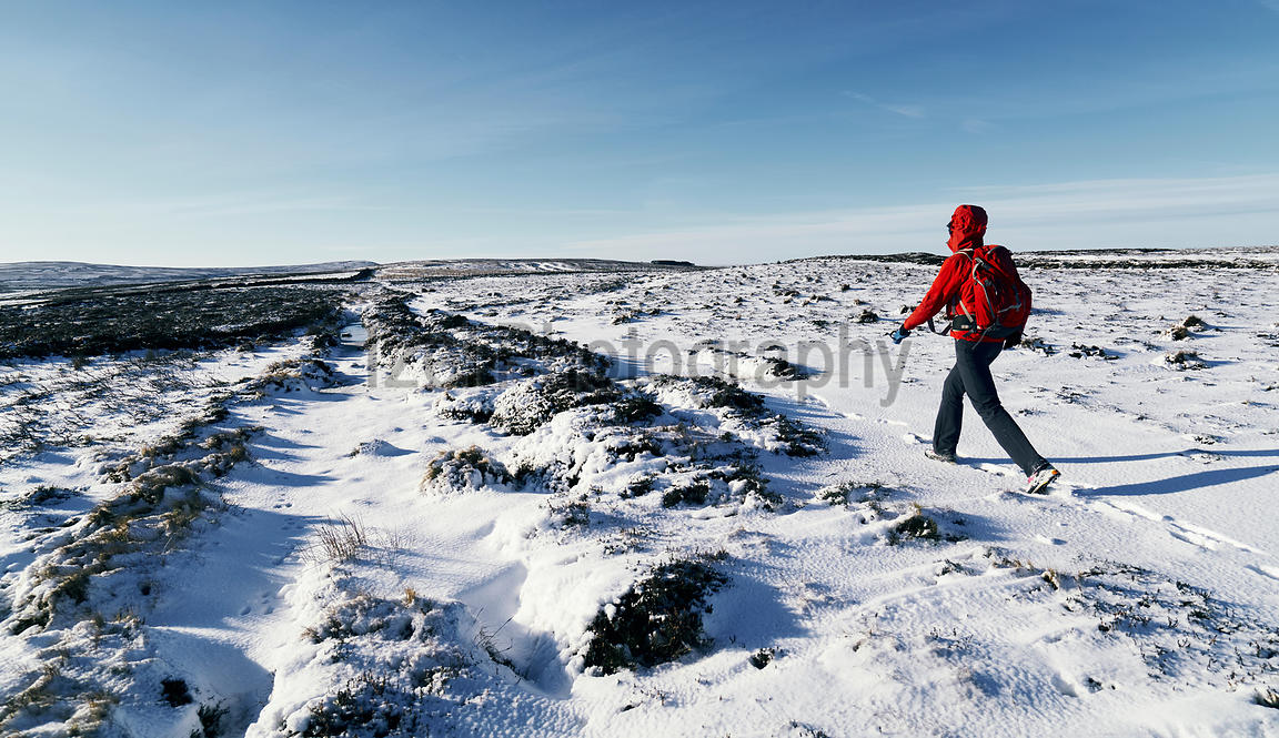 A hiker wearing a red jacket walking through a snow covered winter landscape. Edmondbyer Common, England, UK. Colour styling ...