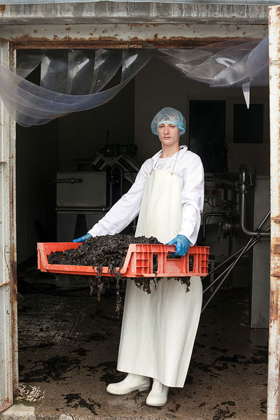 UK - Penclawdd - Ieuan, 17, with laverbread at Penclawdd Shellfish