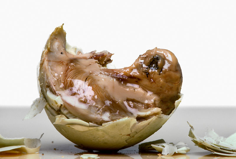 Balut, a Philippine speciality eaten mainly by men and believed to enhance masculinity, is a duck egg containing a full embry...