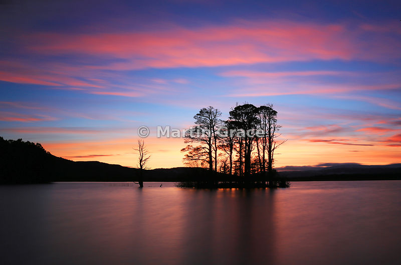 Scots Pine trees at Loch Mallachie after sunset, Strathspey, Scottish Highlands