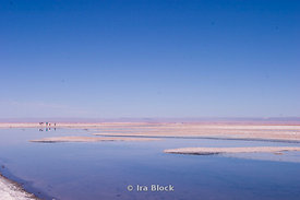 Salt Flats in the Atacama Desert