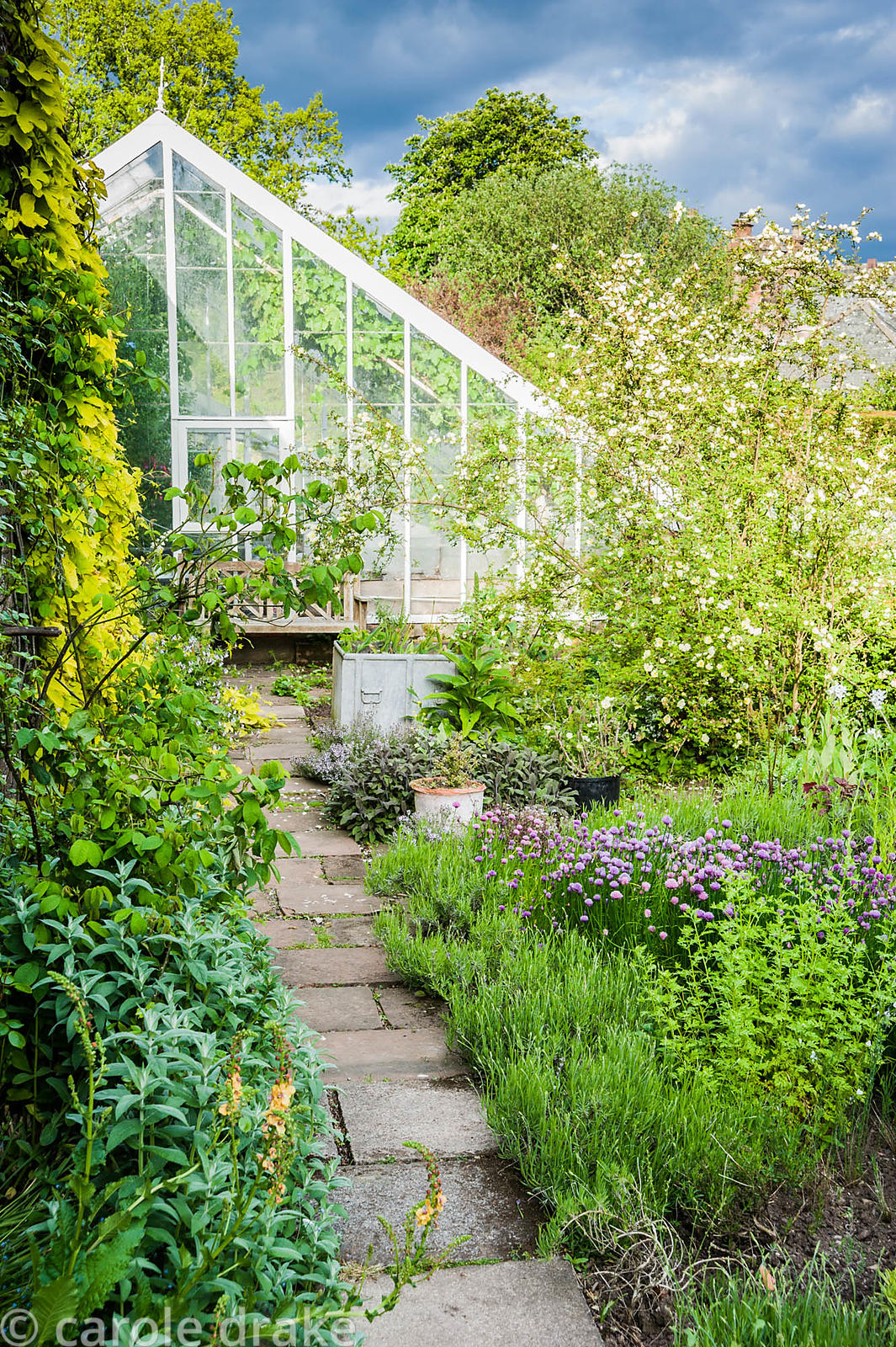 A path leads between lavender, chives, sage and thyme toward the greenhouse.