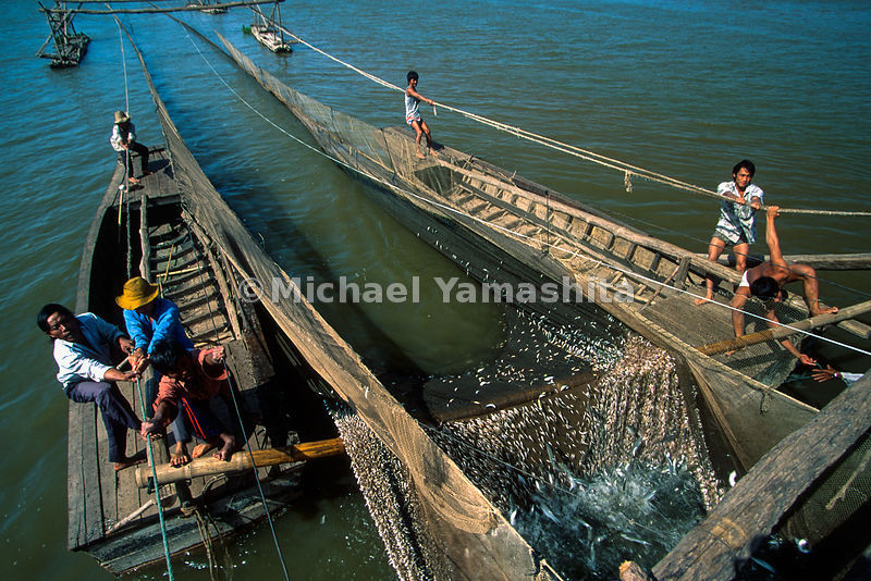 Barrage net fishing. Tonle Sap, Cambodia