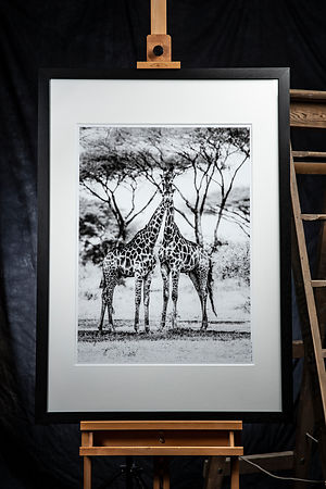'Formal Portraits with Giraffe: Zimbabwe 2017: Photographer: Neil Emmerson 2017: £975