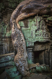 Ta Prohm - Where The Jungle Takes Over