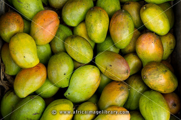 Mangoes for sale, Mombasa, Kenya