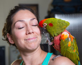 Close up of parrot on womans shoulder kissing her cheek
