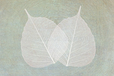 leaves - silhouette - elegant greeting card